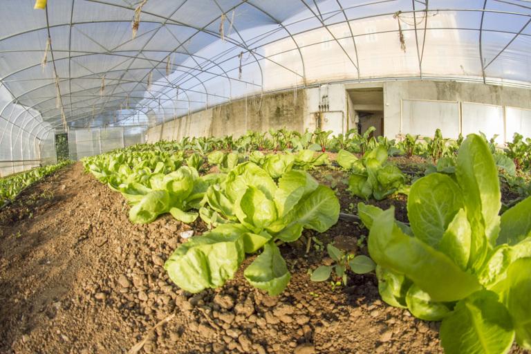 Sveža zelenjava in domači pridelki